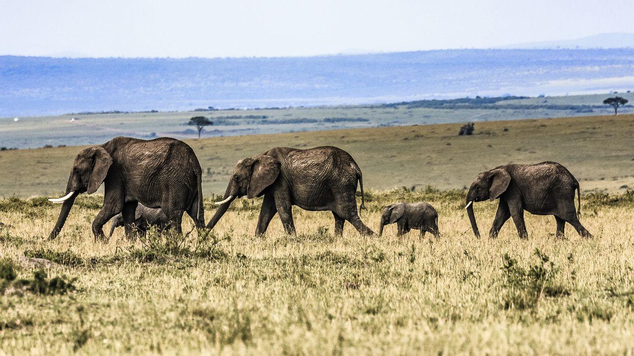 Safari animalier